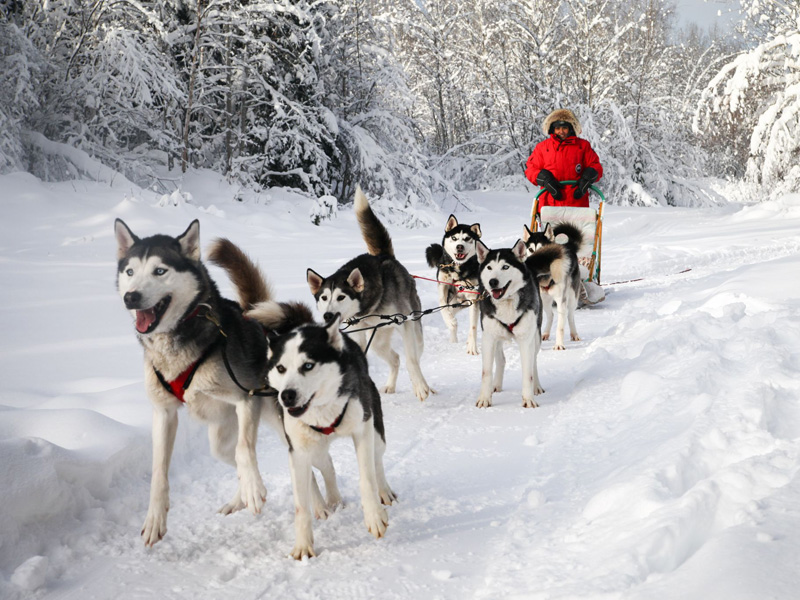 dog-sledding-groups